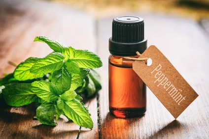 peppermint a potent antiviral herbal medicine