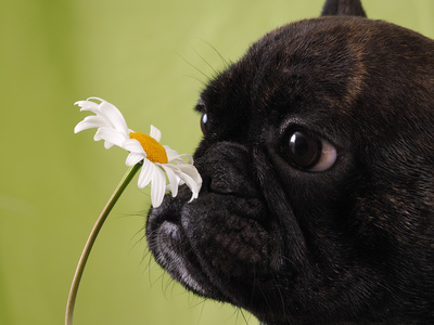 image of dog sniffing a flower