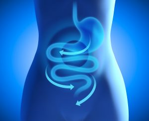 Gut health and digestion