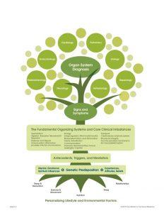 Functional medicine Tree