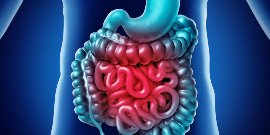 human digestive tract